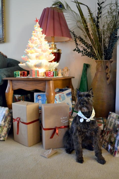 My parents dog Zuzu posing with the Christmas tree and gifts.